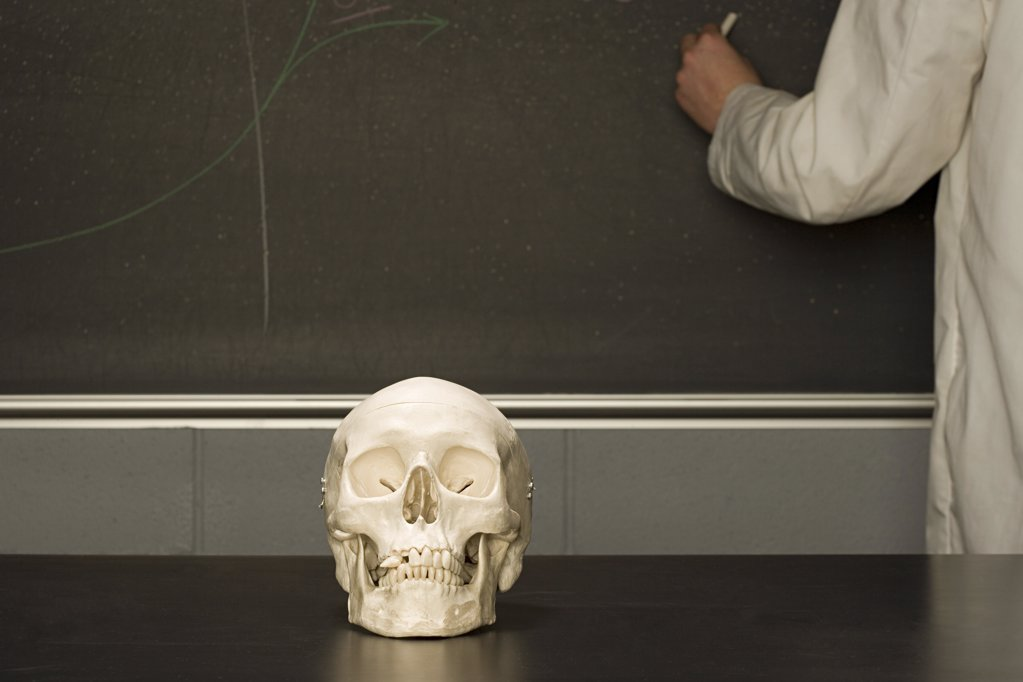 Human skull on a classroom desk : Stock Photo