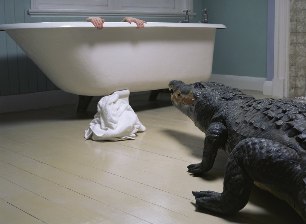 Crocodile in the bathroom : Stock Photo