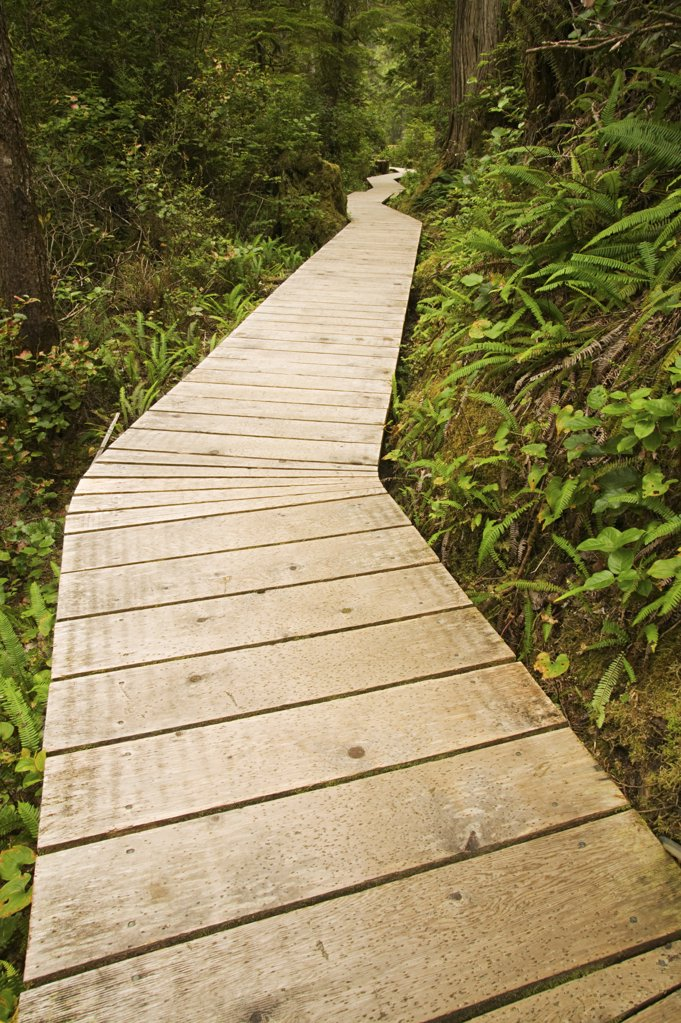 Stock Photo: 1439R-1017333 Wooden path through a forest