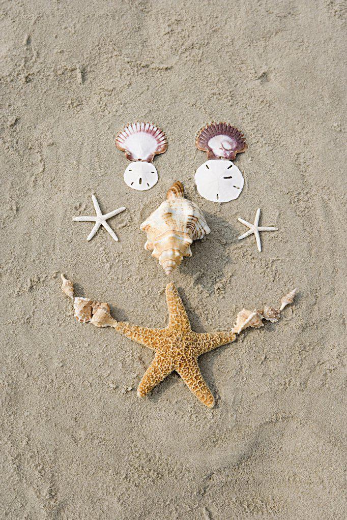 Starfish and shells : Stock Photo