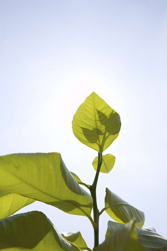 Stock Photo: 1439R-1026704 Plant in sunlight