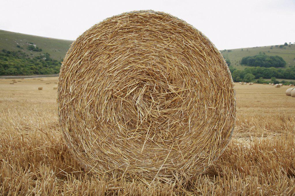 Hay bale : Stock Photo
