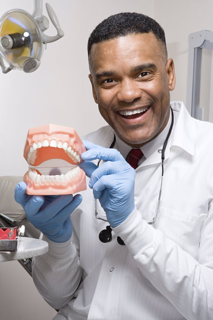 Dentist holding false teeth : Stock Photo
