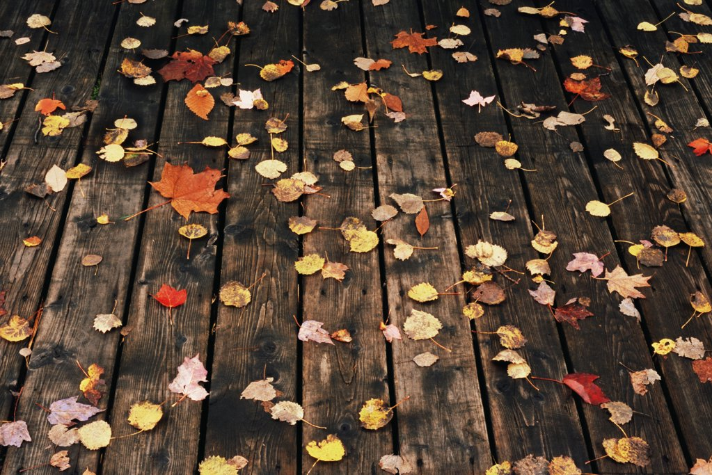Fallen leaves on a deck : Stock Photo