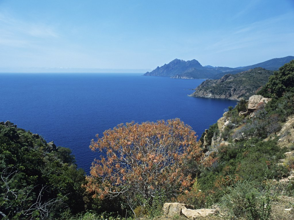 Stock Photo: 1439R-1038970 Corsican coastline
