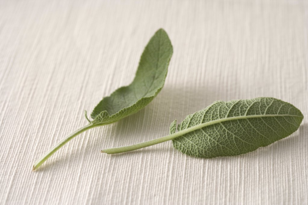 Sage leaves : Stock Photo