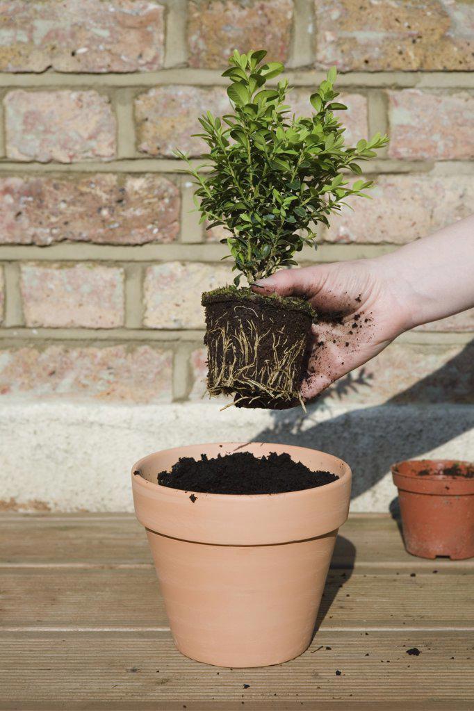 Person gardening : Stock Photo