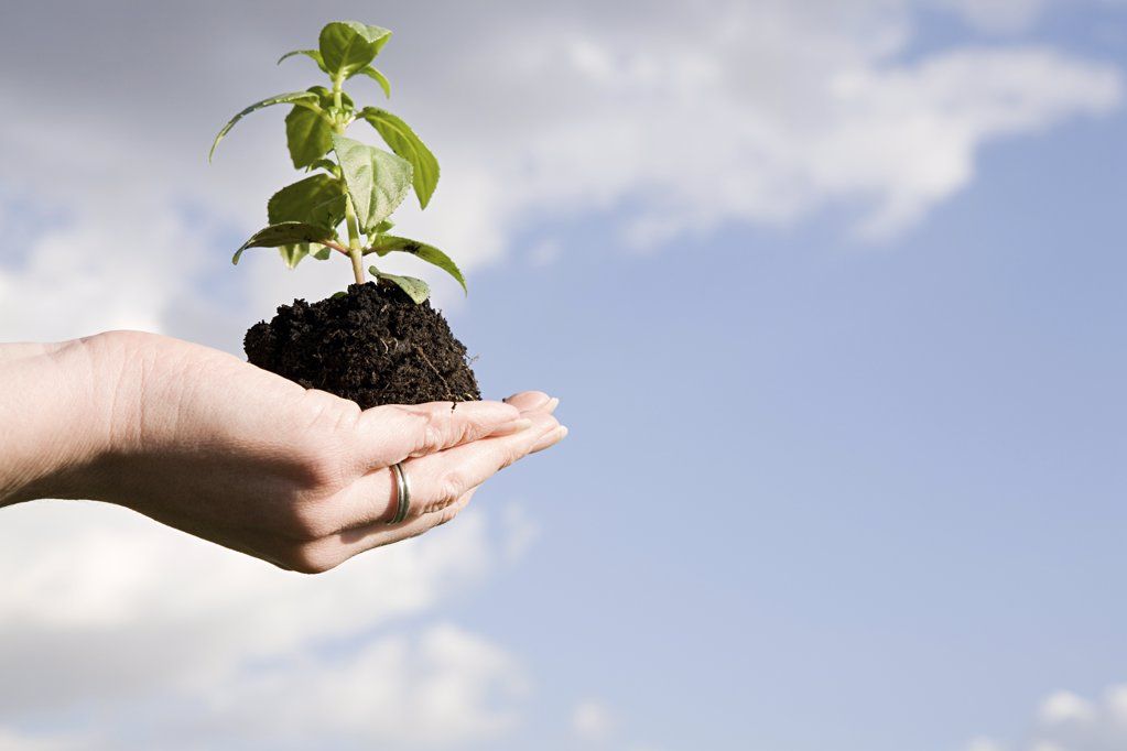 Person holding soil and a sapling : Stock Photo