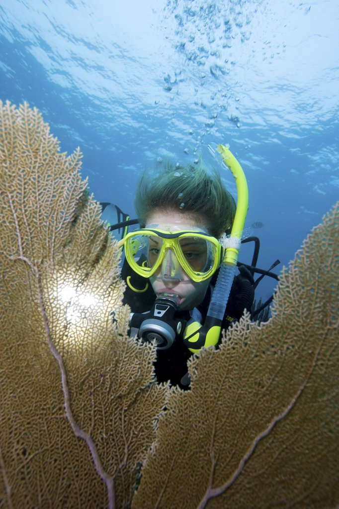 Stock Photo: 1439R-1106952 Diver framed by sea fan.