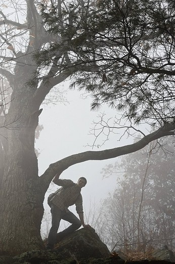 Silhouette of a male hiker crouching under a tree branch : Stock Photo