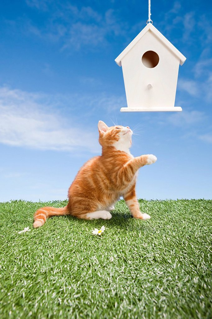 Kitten and birdhouse : Stock Photo