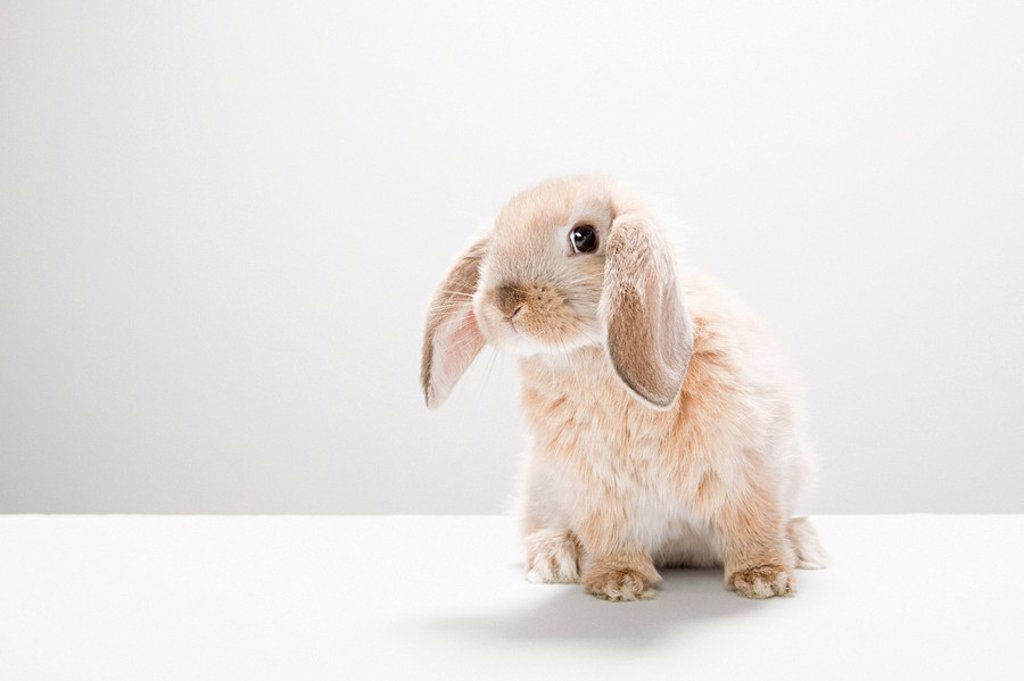 Portrait of a rabbit : Stock Photo
