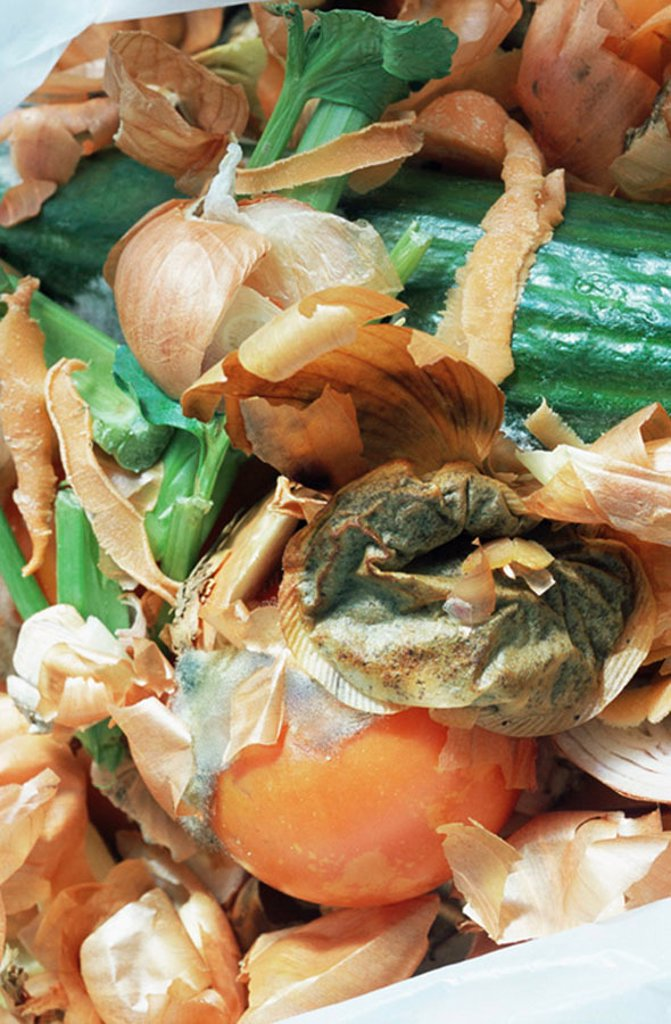 Stock Photo: 1439R-1124040 Rotten vegetables for compost