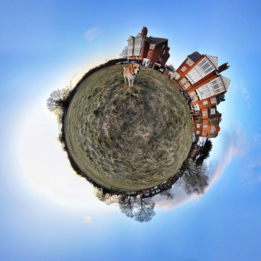 Beagle and houses with little planet effect : Stock Photo