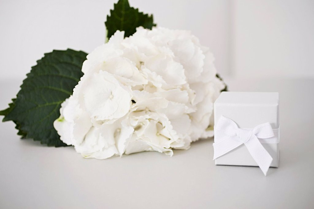 Flowers with gift : Stock Photo