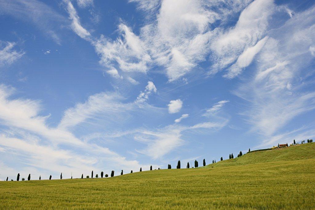 Cypress trees near Siena, Tuscany, Italy : Stock Photo