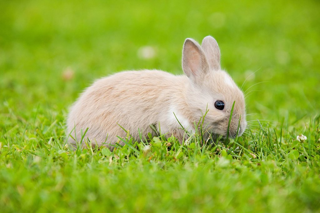 One rabbit sitting on grass : Stock Photo