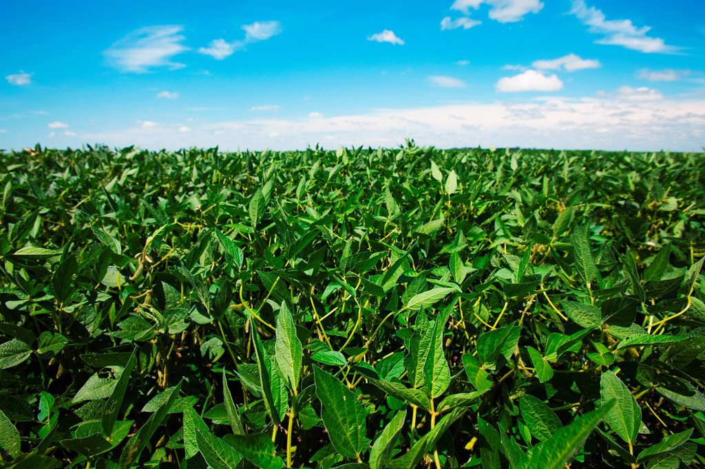 Stock Photo: 1439R-1134440 Soy field, Argentina