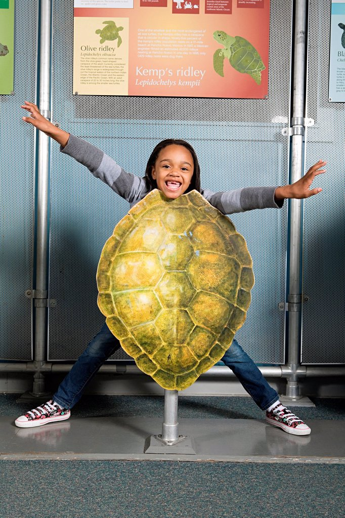 Girl standing behind kemps ridley sea turtle shell : Stock Photo