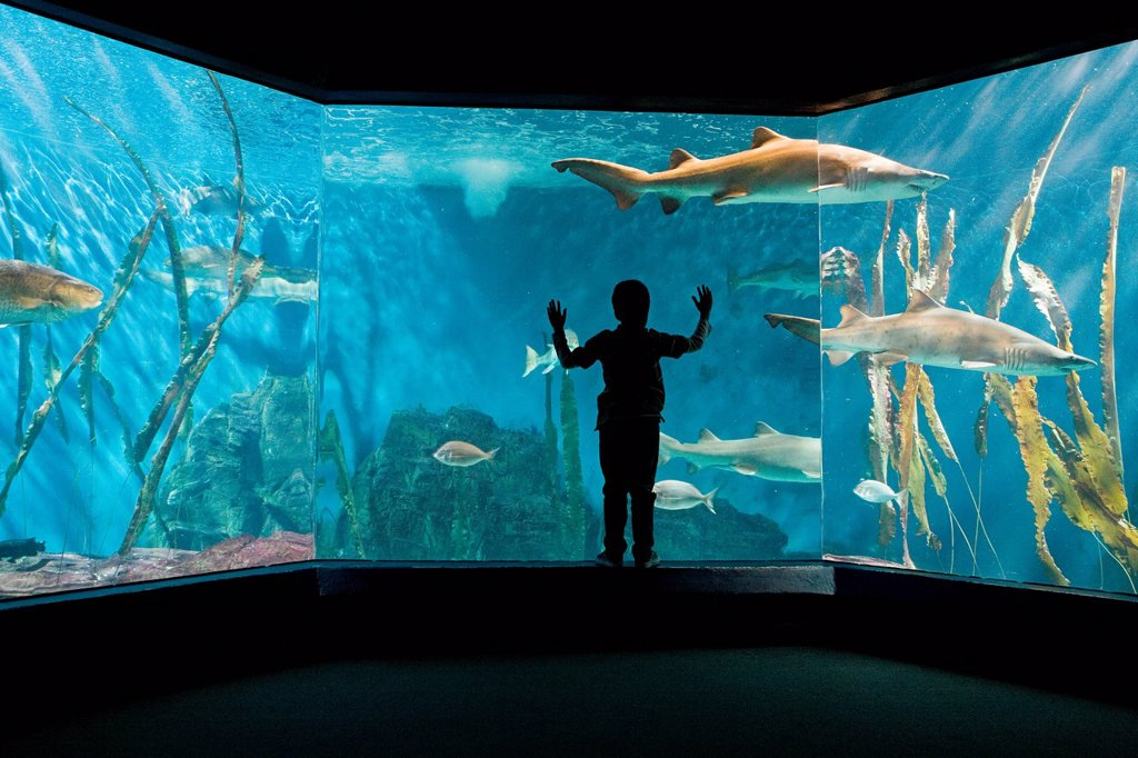 Boy watching sharks in aquarium : Stock Photo