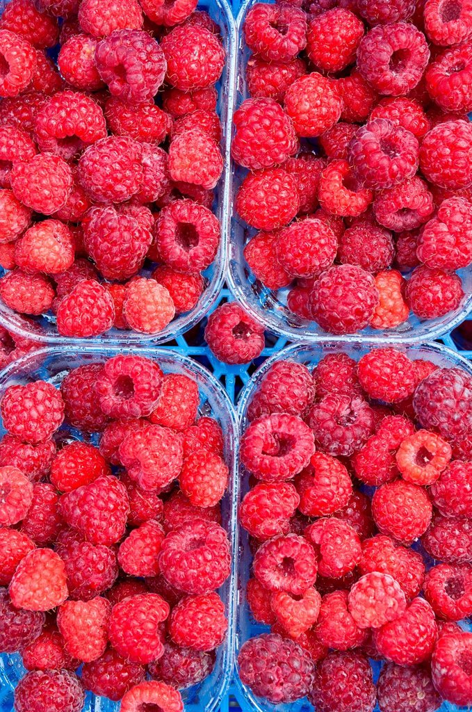 Stock Photo: 1439R-1144367 Raspberries in containers