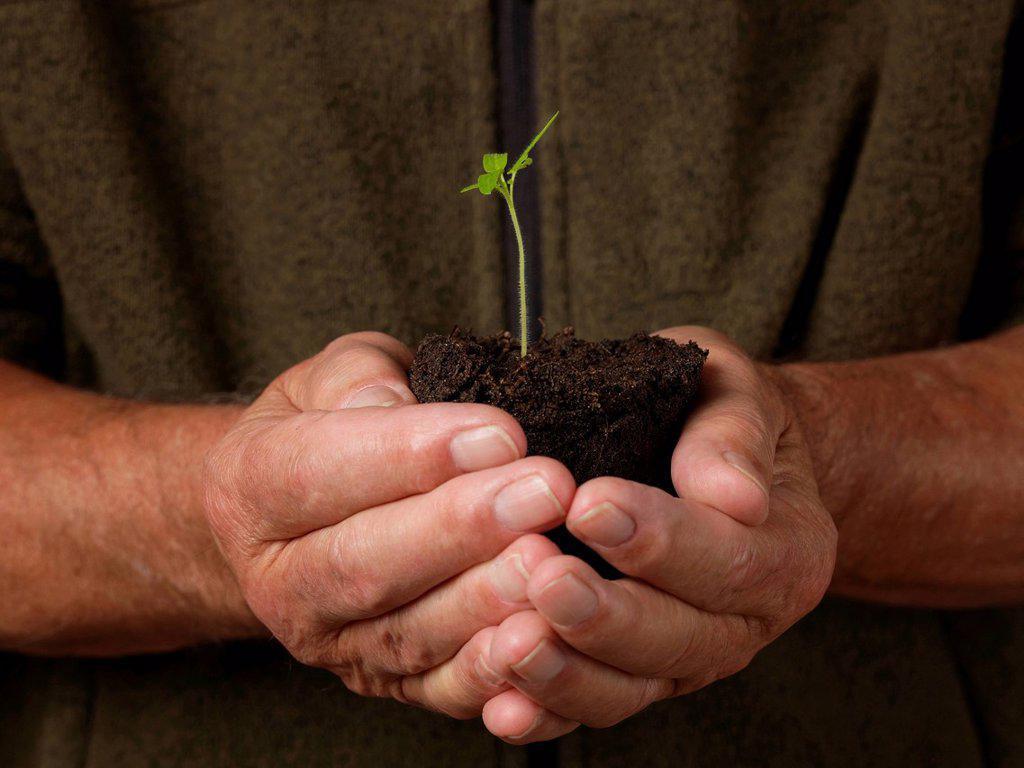 Stock Photo: 1439R-1144824 Man holding seedling