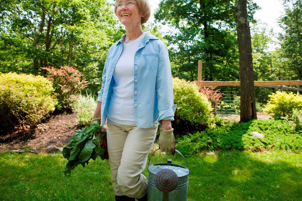 Woman with watering can and beetroot in garden : Stock Photo