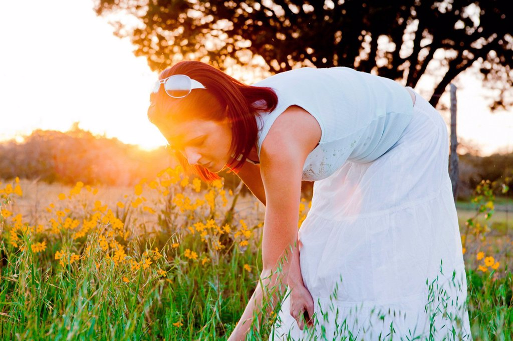 Woman picking flowers in field in sunlight : Stock Photo