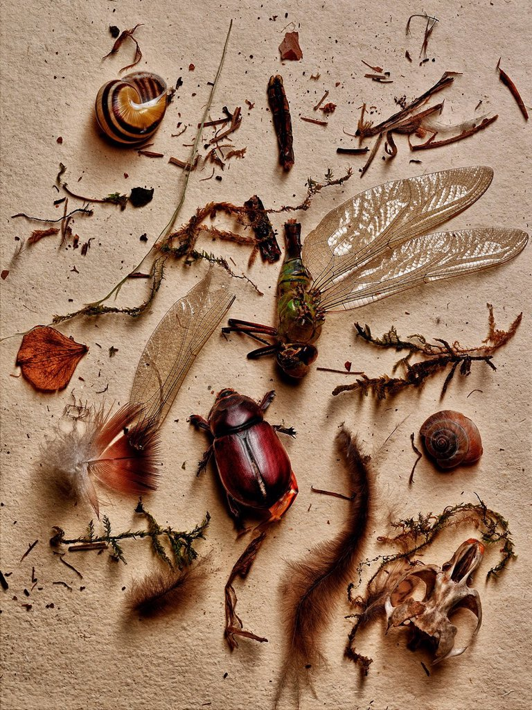 Insects and other elements from nature : Stock Photo