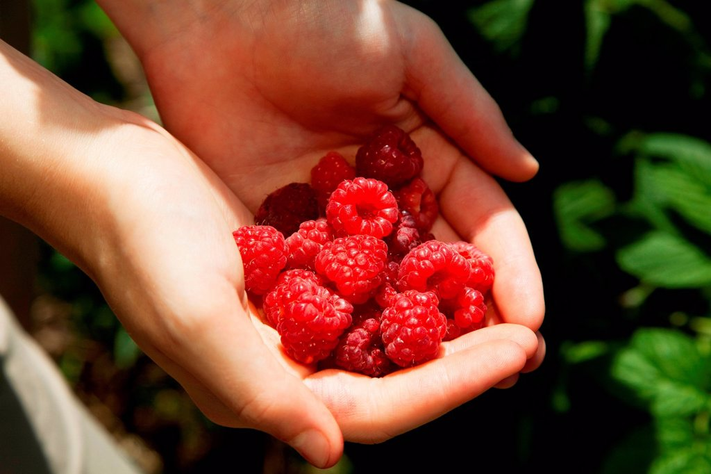 Stock Photo: 1439R-1149285 Woman holding fresh raspberries