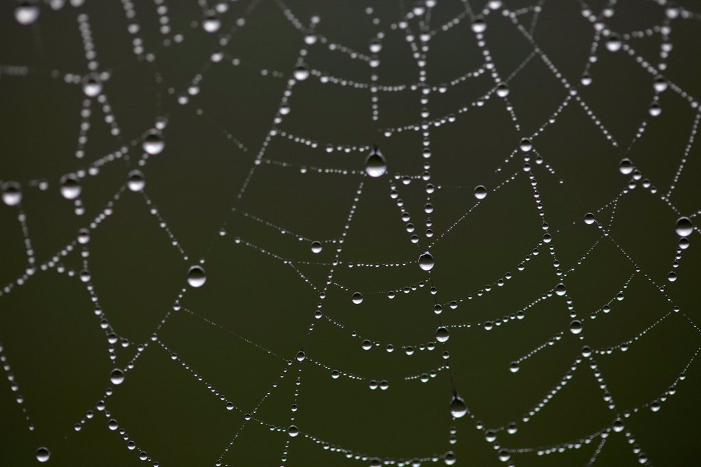 Dew drops on spider´s web : Stock Photo