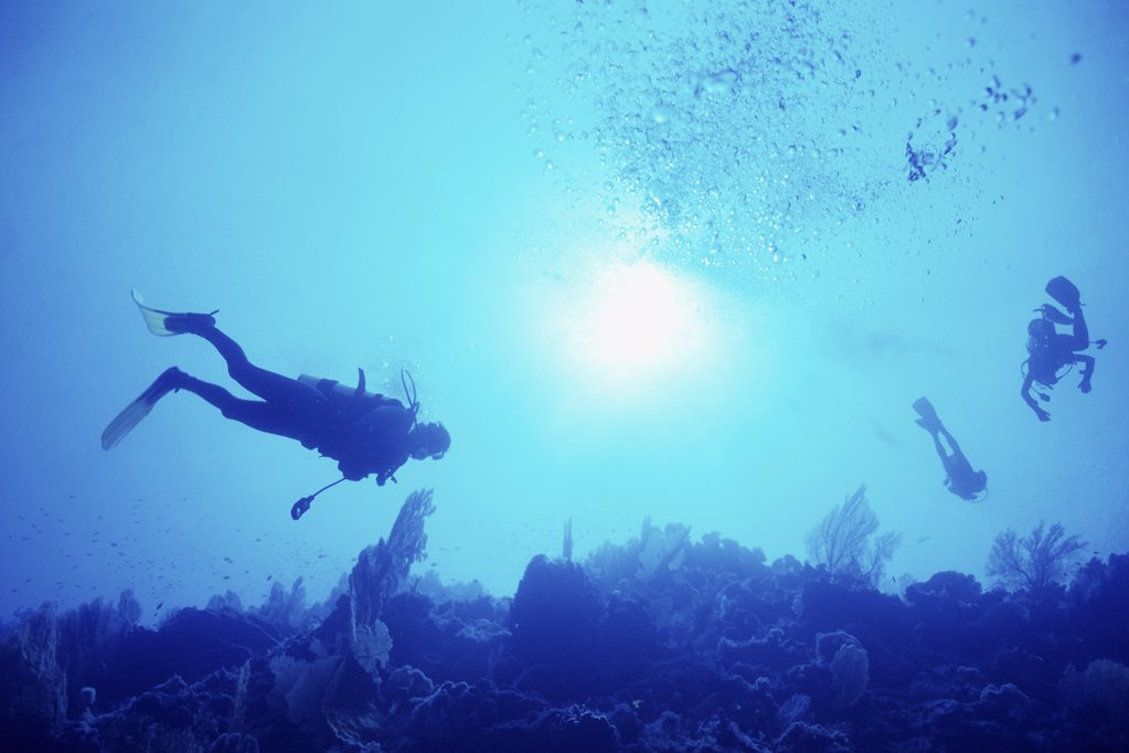 Scuba divers in sea : Stock Photo