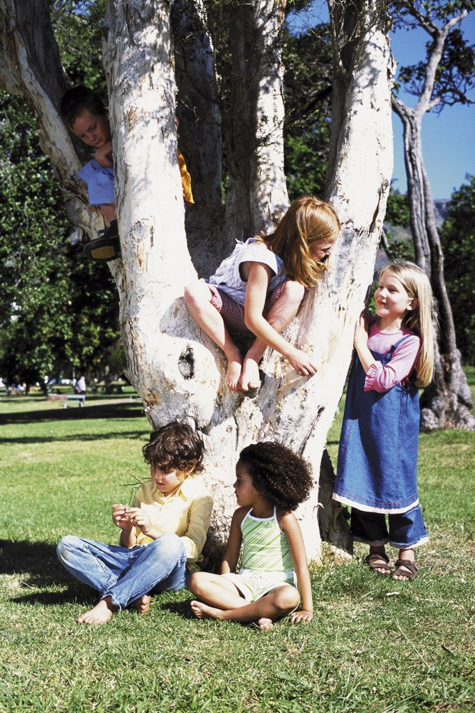 Kids playing on a tree : Stock Photo