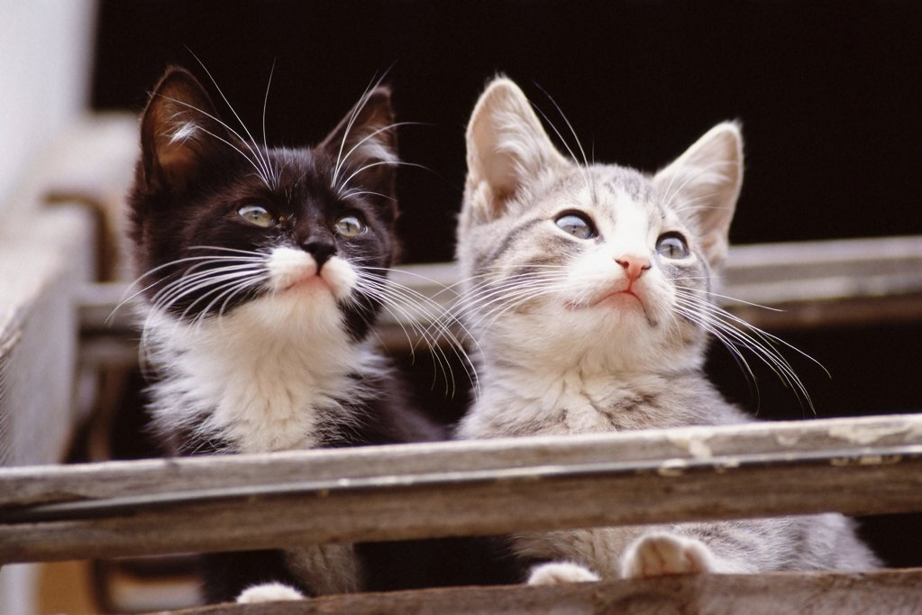 Two kittens on balcony : Stock Photo