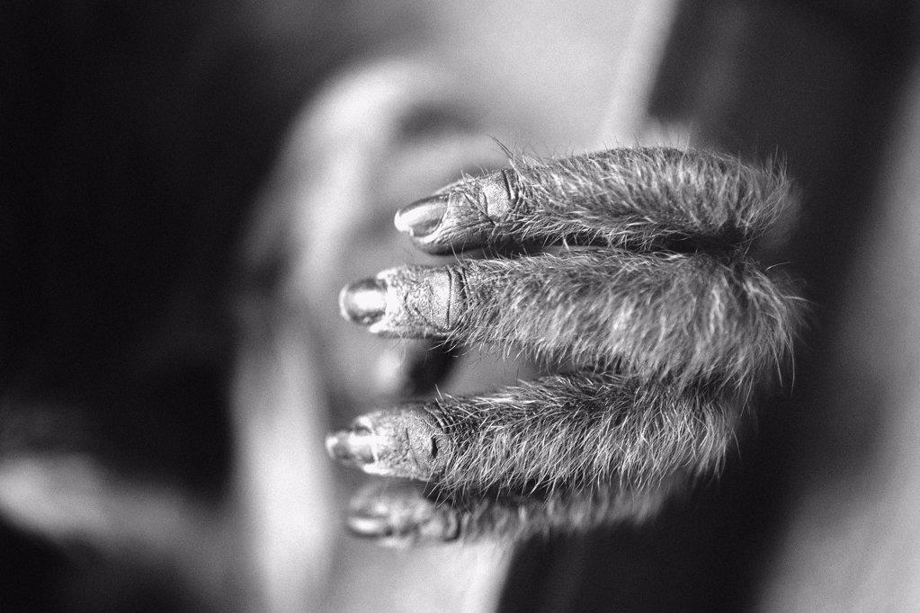 Stock Photo: 1439R-990673 Monkey's hand