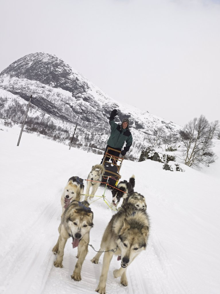 Man on a dog sled : Stock Photo