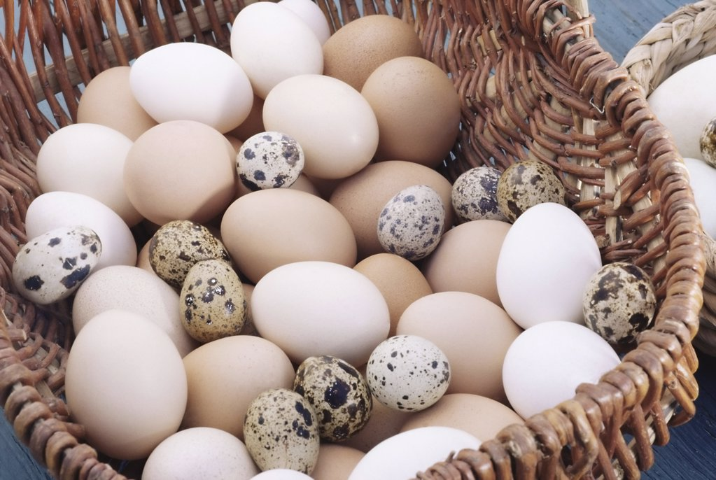 Basket full of eggs : Stock Photo