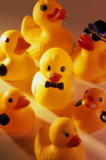 Stock Photo: 1441R-929 High angle view of rubber ducks