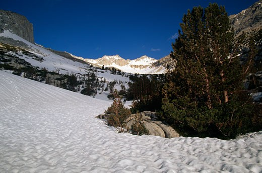 Trees on snow covered mountains, John Muir Wilderness, California, USA : Stock Photo