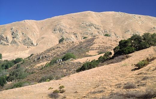 Stock Photo: 1453-602B Trees on a mountain, Mission Peak, Santa Clara Valley, California, USA