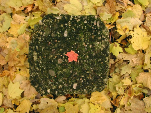Stock Photo: 1463-353 High angle view of a rock with maple leaves