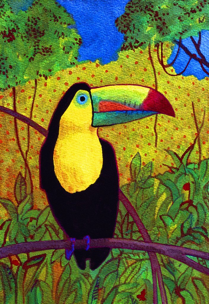 Toucan, John Newcomb (21st C. American), Watercolor, 2005 : Stock Photo