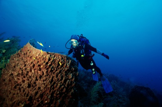 Stock Photo: 1481-212 High angle view of a scuba diver underwater