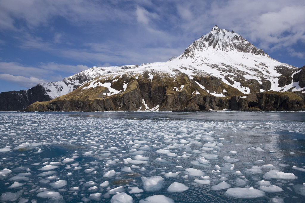 Ice floats in the sea, Iris Bay, South Georgia Island, South Sandwich Islands  : Stock Photo