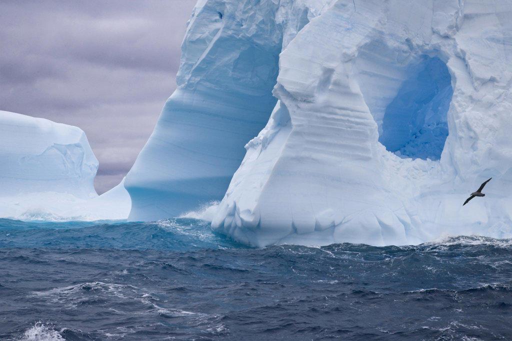 Iceberg in the sea, South Georgia Island, South Sandwich Islands : Stock Photo