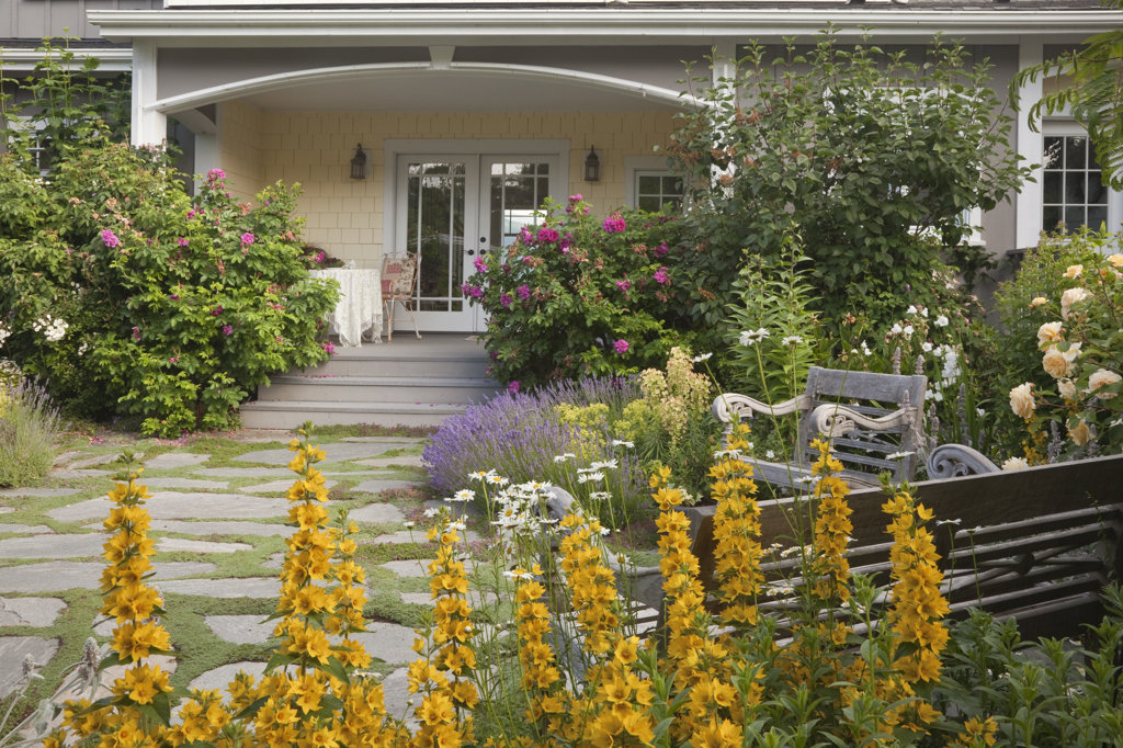Stock Photo: 1482R-1866 Loosestrifes in front of a house, Kitsap, Seabeck, Washington State, USA