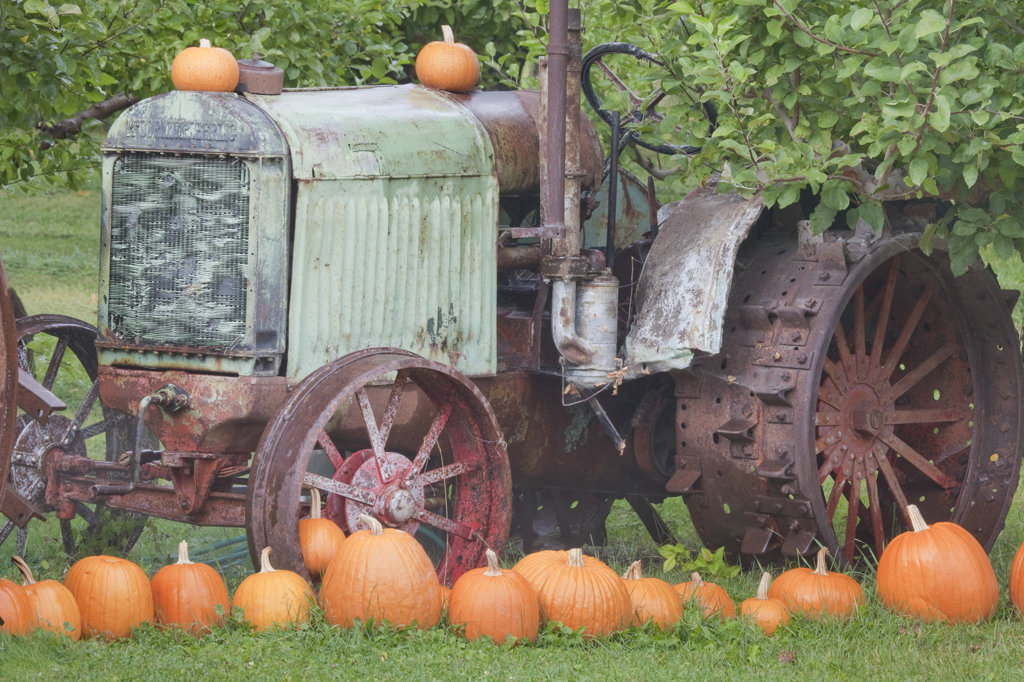 Old tractor with pumpkins in a field, Keremeos, British Columbia, Canada : Stock Photo