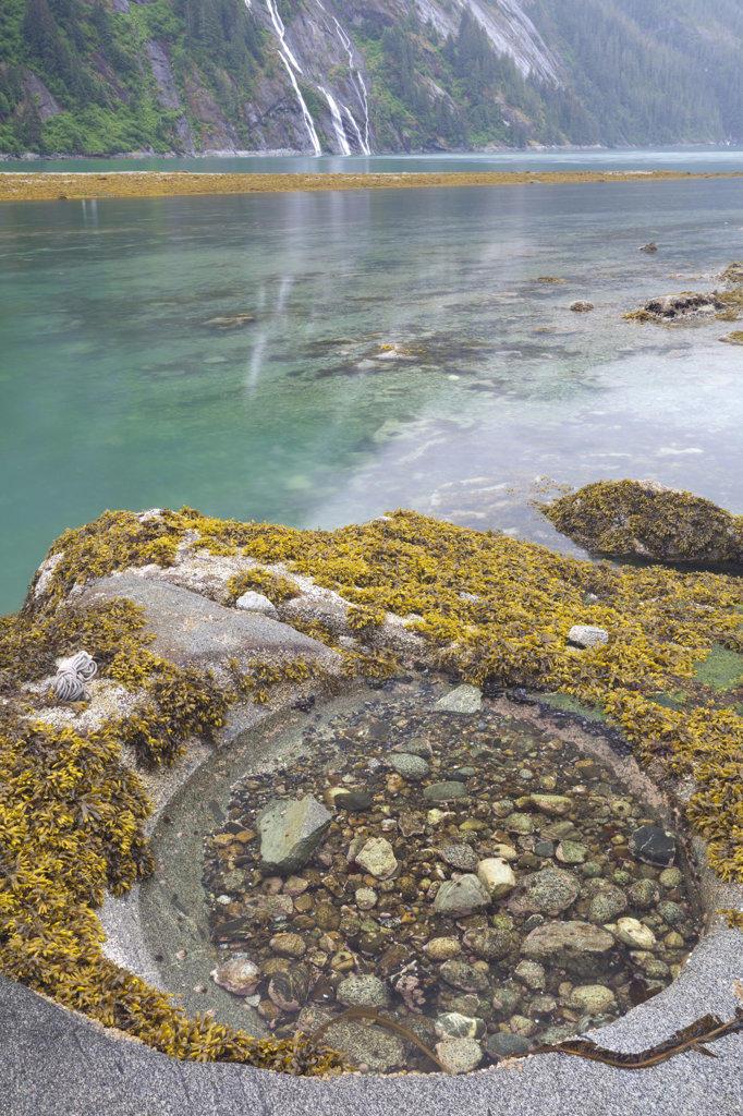 Tidal pool at coast, Endicott Arm, Alaska, USA : Stock Photo