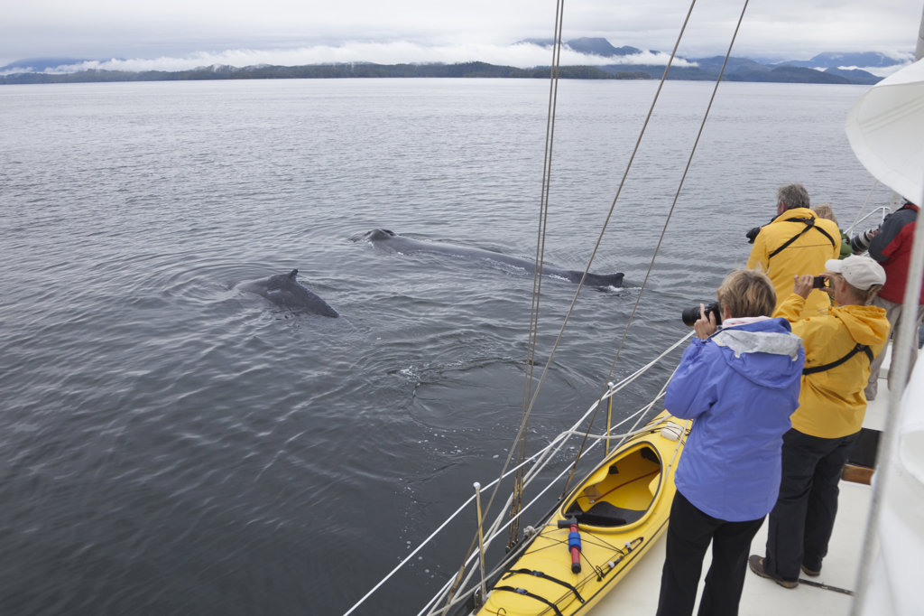 Stock Photo: 1482R-2256 Tourists photographing Humpback whales (Megaptera novaeangliae), British Columbia, Canada
