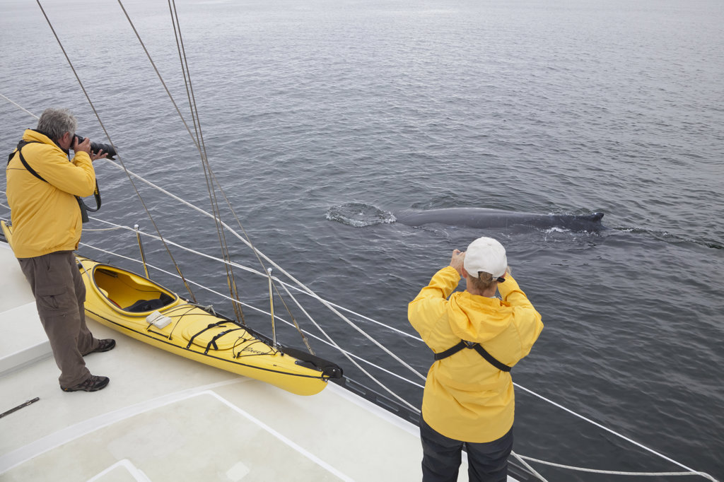 Tourists photographing Humpback whales (Megaptera novaeangliae), British Columbia, Canada : Stock Photo